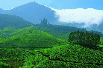 9 Days 8 Nights Kerala  Packages - South chalo
